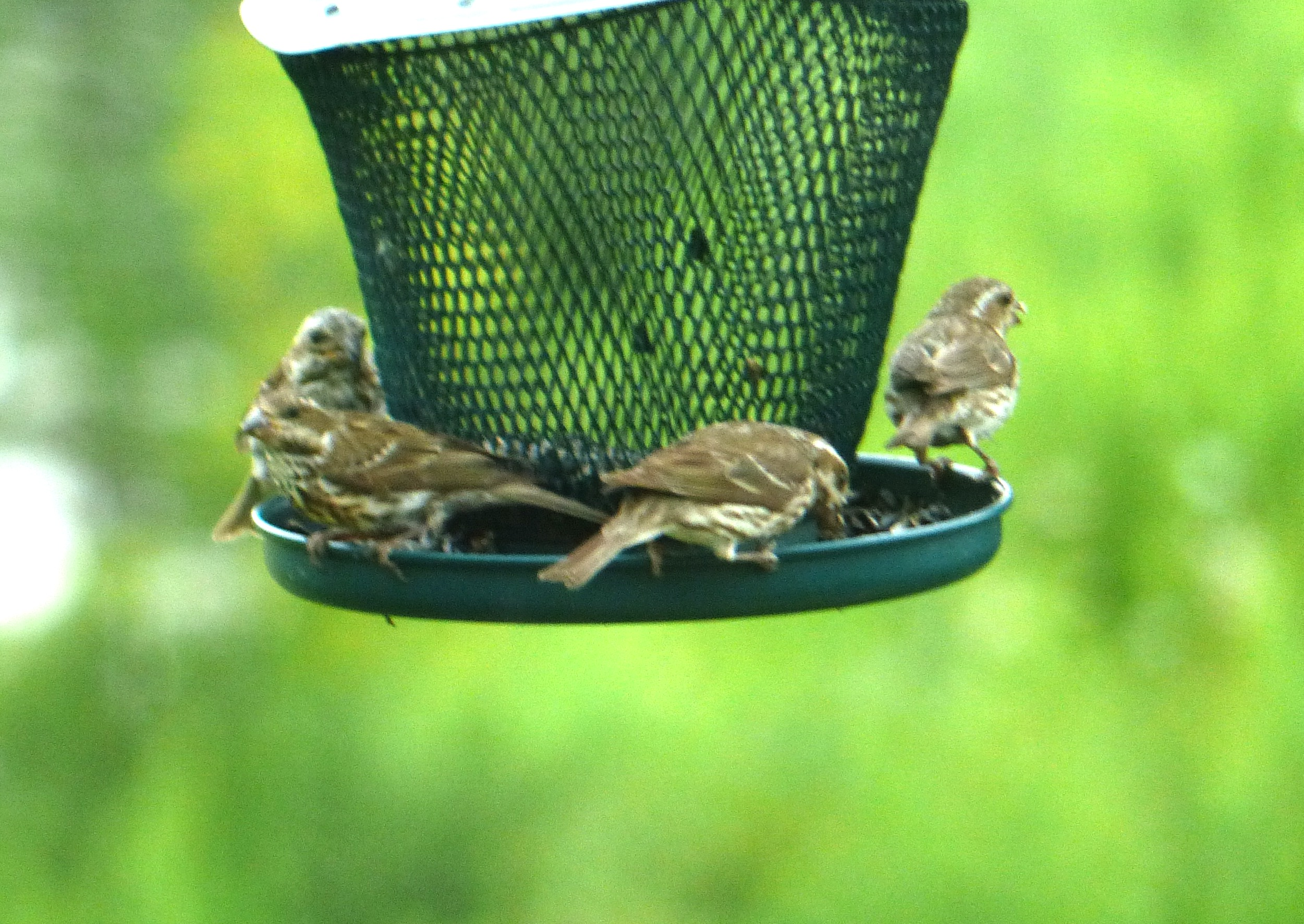 August 5, 2014 – Fledglings | Nature's Charms